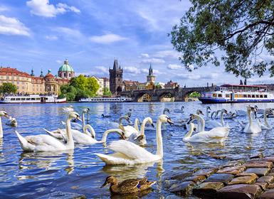 Praga y Viena Esencial A Tu Aire en tren