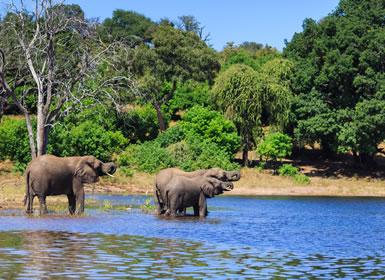 Zimbabue y Botsuana: Tras la senda de los Elefantes