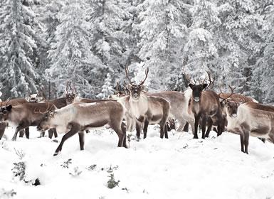 Finlandia: Laponia Finlandesa y Santa Claus