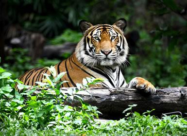 India: Parques Nacionales y Norte Clásico