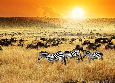 Combinados África Kenia y Zanzíbar Al Completo