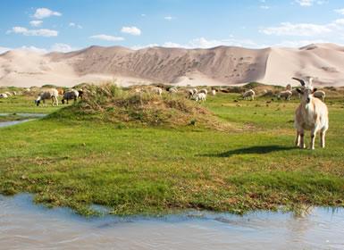 Mongolia: Desde el Desierto Gobi hasta Karakorum