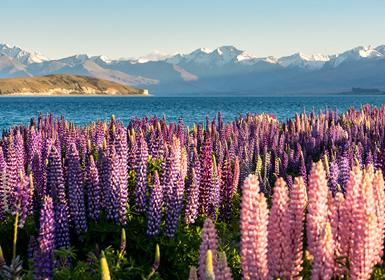 Nueva Zelanda, Australia e Indonesia: Nueva Zelanda, Sídney y Bali