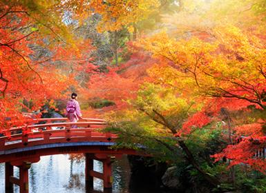 Viaje China 2017: Viaje China y Japón: Tokyo, Kyoto, Osaka, Beijing, Xian y Shanghai…