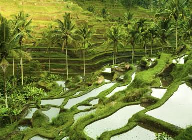 Viajes de novios baratos en Indonesia: Ubud y playas de Bali