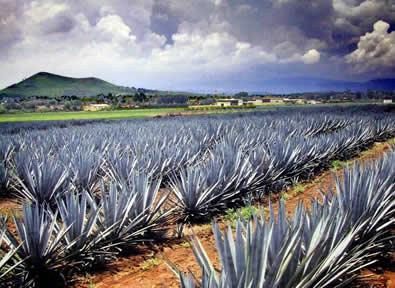 Tequila Circuito México