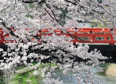 Turismo Takayama Japón