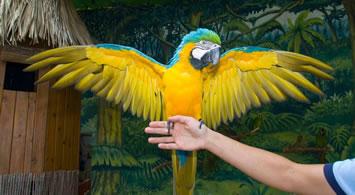 Show de Aves Exóticas