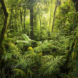Viajes baratos 2016 Costa Rica: Naturaleza Al Completo y Playas