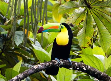 Viajes de Novios Costa Rica
