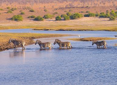 Viajes Kenia y Tanzania 2019-2020: Safari en Kenia, Tanzania y Zanzíbar