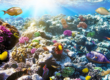 Viajes Egipto 2019-2020: Egipto:Playas del Mar Rojo