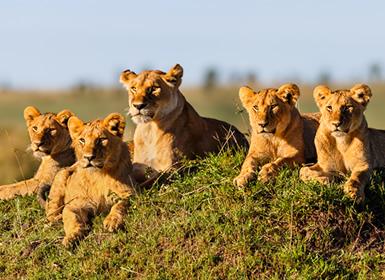 Viajes Kenia 2019-2020: Safari en Kenia con Masai Mara