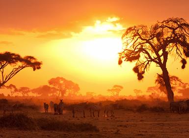Viajes Kenia 2019-2020: Safari en Kenia con Masai Mara y Nairobi
