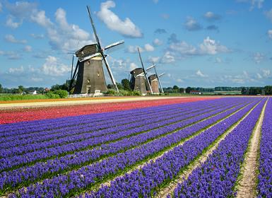 Viajes Holanda y Países Bajos 2019-2020: Ruta de las Flores