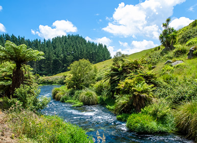 Viajes Nueva Zelanda 2018-2019: Ruta por la Isla Norte