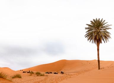 Viajes Marruecos 2019: Marrakech y Desierto
