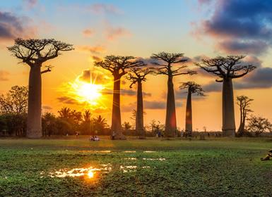 Viajes Madagascar 2017: Madagascar con Andasibe, Tsingys y Morondava