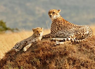 Viajes Kenia, Isla Mauricio e Islas del Índico 2018-2019: Safari en Kenia con Masai Mara y Mauricio