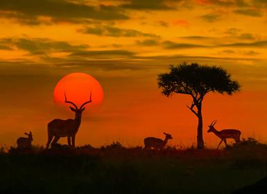 Viajes Sudáfrica 2017: Sudáfrica con Parque Kruger y Pretoria