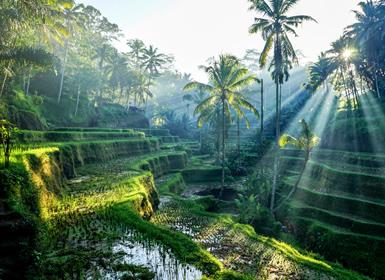 Viajes China, Indonesia y Singapur 2019-2020: Hong Kong, Ubud con Playas del Sur de Bali y Singapur
