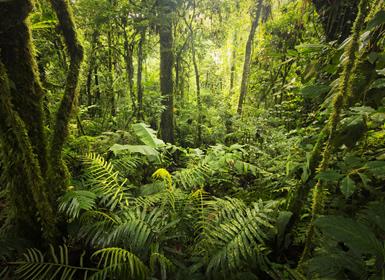 Viajes Costa Rica 2019-2020: Tortuguero, Caribe, Arenal, Monteverde y Guanacaste sin noche en San José a la vuelta