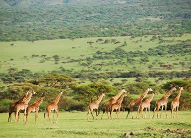 Viajes Kenia 2019: Safari en Kenia con Parque Aberdare y Nairobi