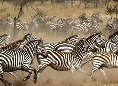 Viajes Tanzania 2018-2019: Tanzania con Serengeti