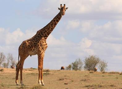 Viajes Kenia 2019-2020: Safari en Kenia con Samburu y Masai Mara