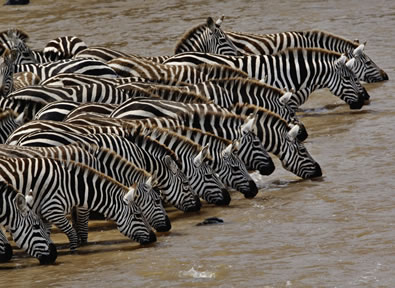 Viajes Islas del Índico y Kenia 2019-2020: Safari en Kenia y Maldivas