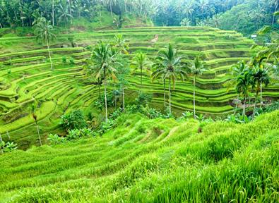 Viajes Indonesia 2019-2020: Circuito Familiar Mi Primer Viaje a Bali