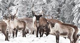 Busca un Viaje Chollo en Finlandia: Laponia Finlandesa, Auroras Boreales y Santa Claus