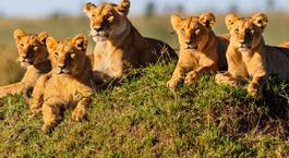 Busca un Viaje Chollo en Kenia: Safari en Kenia con Masai Mara
