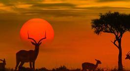 Busca un Viaje Chollo en Sudáfrica: Sudáfrica con Parque Kruger y Pretoria
