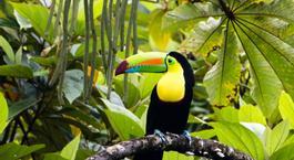 Busca Chollo Vacaciones en Costa Rica: Tortuguero, Arenal, Monteverde y Guanacaste