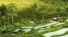 Indonesia: Ubud y Playas de Bali