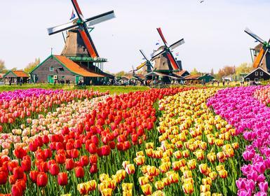 Viajes Países Bajos, Alemania y Bélgica 2019-2020: Circuito Países Bajos y Crucero por el Rhin - Viaje Mayores 60 Años