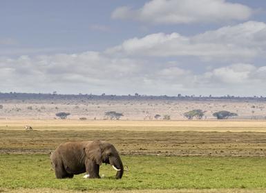 Viajes Kenia 2019-2020: Safari en Kenia y Mombasa