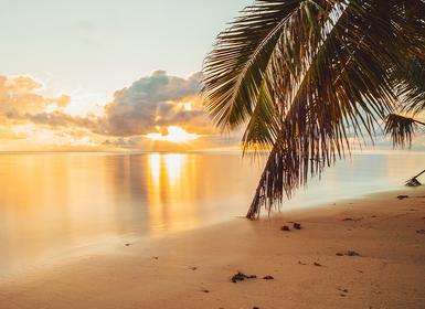 Viajes Islas del Índico, Seychelles y Kenia 2019-2020: Safari en Kenia y Seychelles