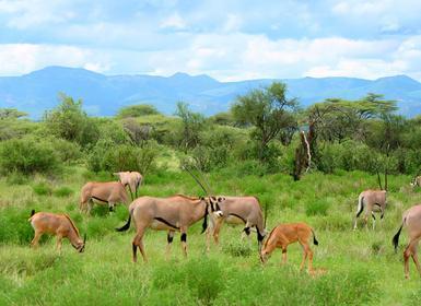 Viajes Kenia y Tanzania 2019-2020: De Tarangire a Masai Mara