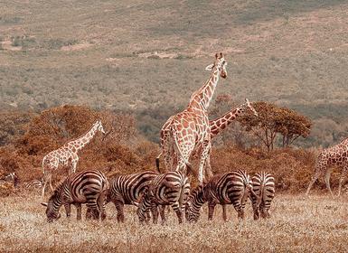 Viajes Kenia y Tanzania 2019-2020: De Lago Manyara a Masai Mara con Aberdares