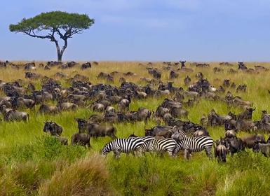 Viajes Kenia 2019-2020: Tour Aberdares, Nakuru y Masai Mara Sopa Lodges