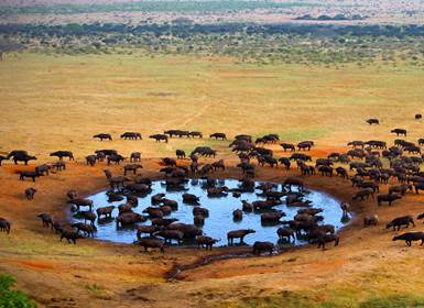 Viajes Kenia 2019-2020: Safari Masai Mara, Naivasha y Amboseli Sopa Lodges
