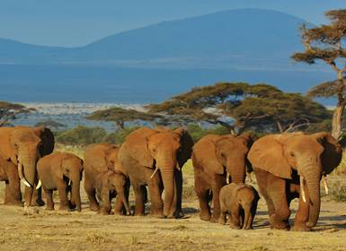 Viajes Islas del Índico y Kenia 2019: Masai Mara, Naivasha y Amboseli Sopa Lodges y Seychelles