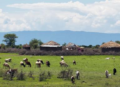 Viajes Kenia y Tanzania 2019-2020: Safari De Nakuru al Lago Manyara