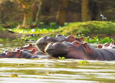 Viajes Tanzania y Kenia 2019: Safari De Masai Mara al Lago Manyara