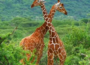 Viajes Kenia 2019: Paquete De Aberdares a Masai Mara con Samburu