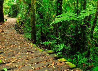 Viajes Costa Rica 2019-2020: San José, Monteverde, Arenal, Tortuguero, Selva Bananito y Caribe