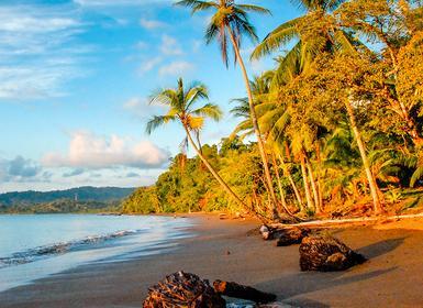 Viajes Costa Rica 2019-2020: Viaje San José, Tortuguero, Arenal, Manuel Antonio, Bahía Drake y Corcovado