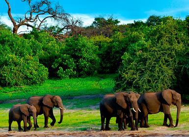 Viajes Zimbabue y Botsuana 2019-2020: Safari por Sudáfrica, Cataratas Victoria y Chobe